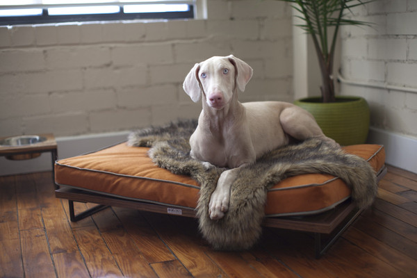furniture-for-pets_7