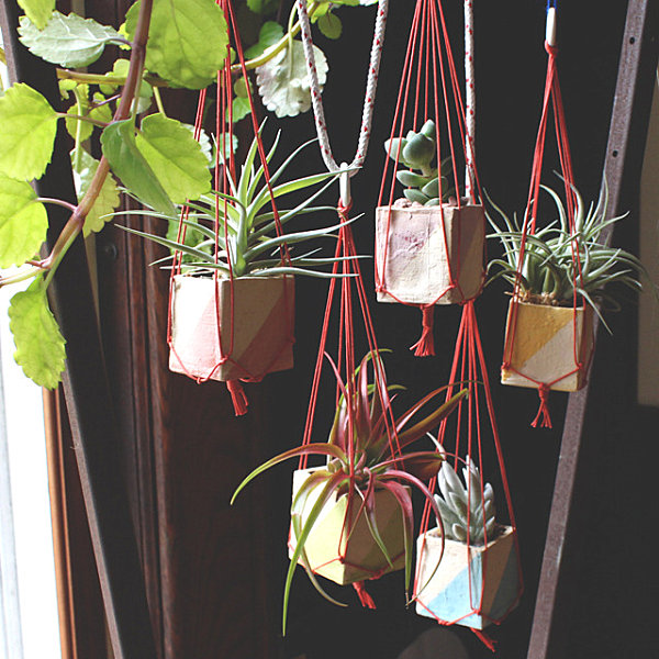indoor-plants_10