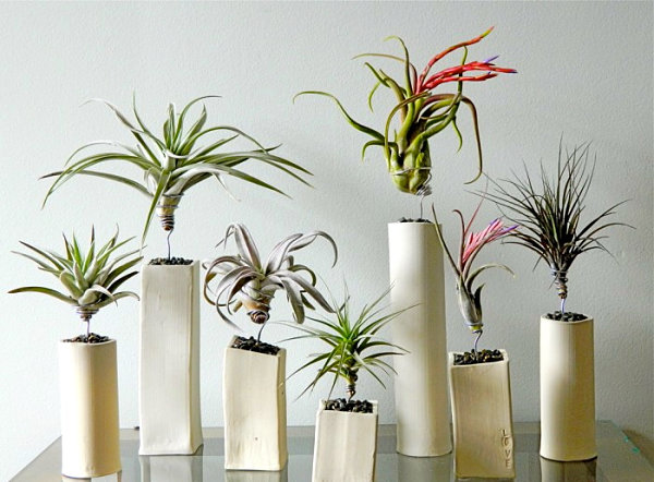 indoor-plants_11