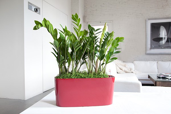indoor-plants_3