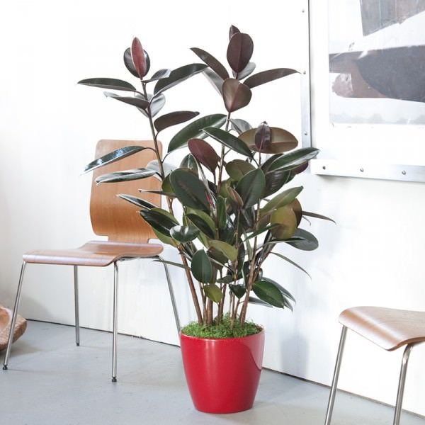 indoor-plants_4
