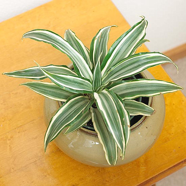 indoor-plants_6